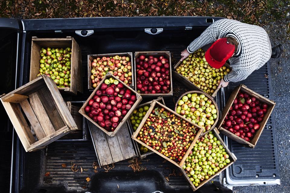 Pomme à cidre, pomme à croquer, pomme sauvage